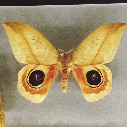 Science museum Barcelona taxidermy butterfly