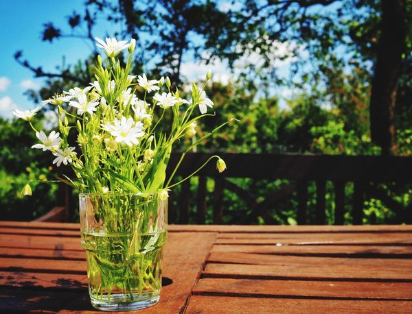 Wild flowers: Sunday afternoon in the garden - Flower Flowers Flowers,Plants & Garden Flowerporn Garden Garden Photography Focus On Foreground Table No People Day Nature Plant Green Color Outdoors Close-up Freshness Beauty In Nature Tree