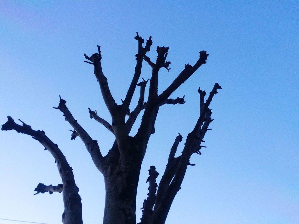 枝っぷり! Nature Clear Sky No People Day Beauty In Nature Japan Japanese  EyeEm Gallery Iphonegallery Nature Happy Smile♡