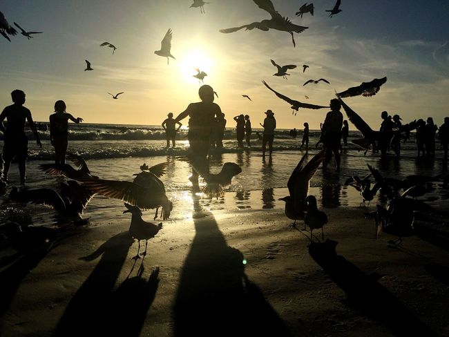 Joy Sunset Birds Joy Florida
