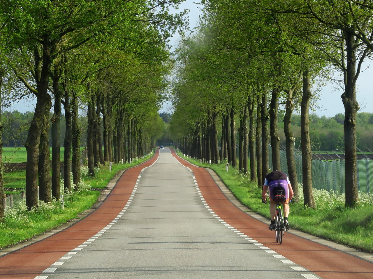 tree, bicycle, the way forward, transportation, real people, cycling, nature, outdoors, rear view, tree trunk, growth, day, road, beauty in nature, men, full length, one person, people