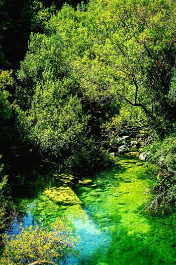 Pantalica Nature Tranquil Scene Water Outdoors River Scenics Green Color No People Sicilia Siciliabedda Siracusa Beauty In Nature Beautiful Place Excursion RNO Nature Photography Wildlife Photography Tree Riserva Naturale Green Color Escursione Wildlife & Nature Green Nature Sicily
