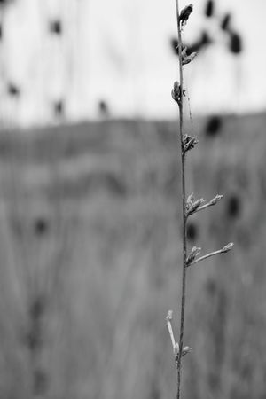 Dry Grass Plant Black And White Photography Black And White Collection  Close Up Photography Focus On Foreground Blury Background Outdoors Nature River Side Nature_collection Nature Photography