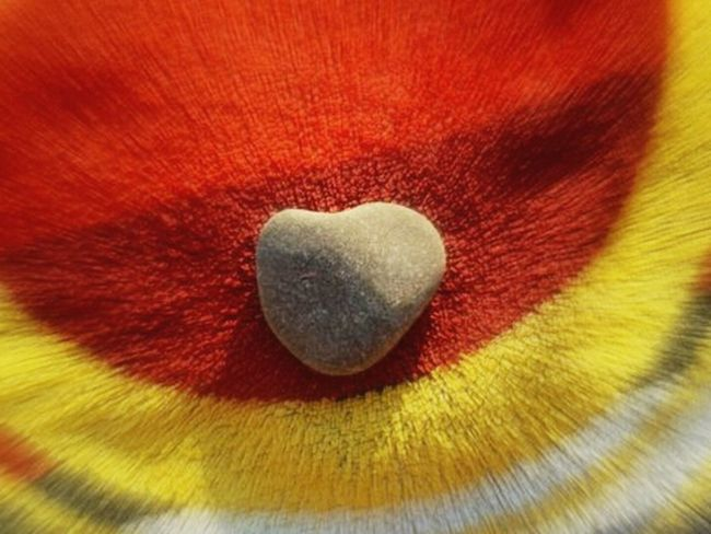 Heart <3 Love <3 Colours Of Love Rock Of Love