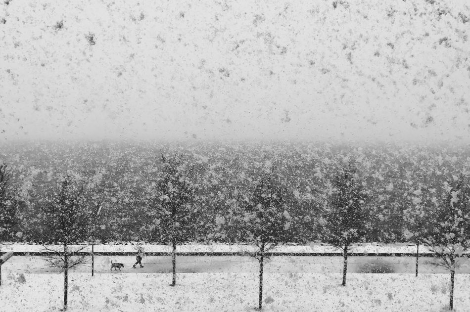 Snow Cold Temperature Winter Weather Snowing Tranquil Scene Nature Beauty In Nature Cold Tree Landscape Outdoors