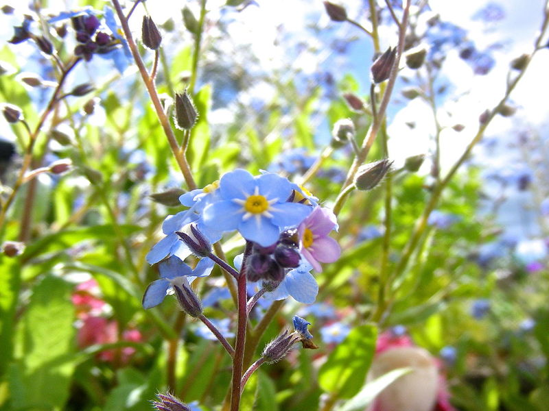 Green Beauty In Nature Blooming Blossom Blue Blue Blossom Close-up Day Flower Flower Head Fragility Freshness Nature No People Outdoors Plant Springtime