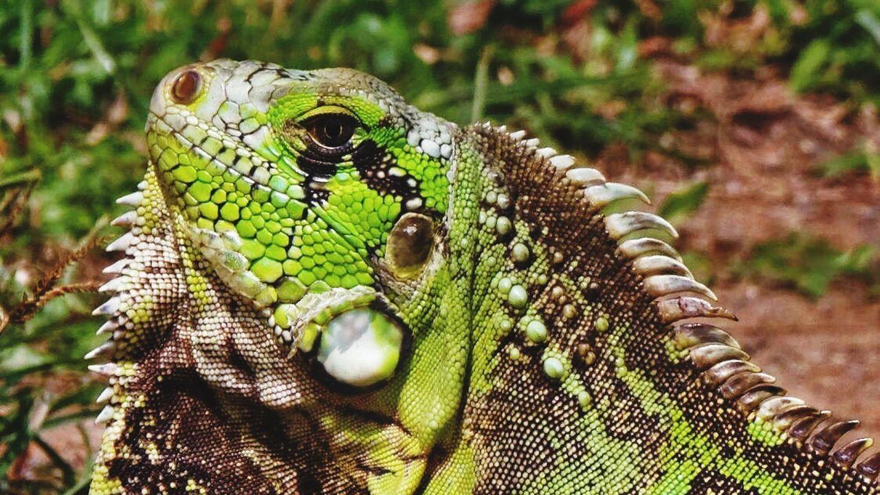 Beautiful stock photos of brazil, one animal, animal themes, wildlife, animals in the wild