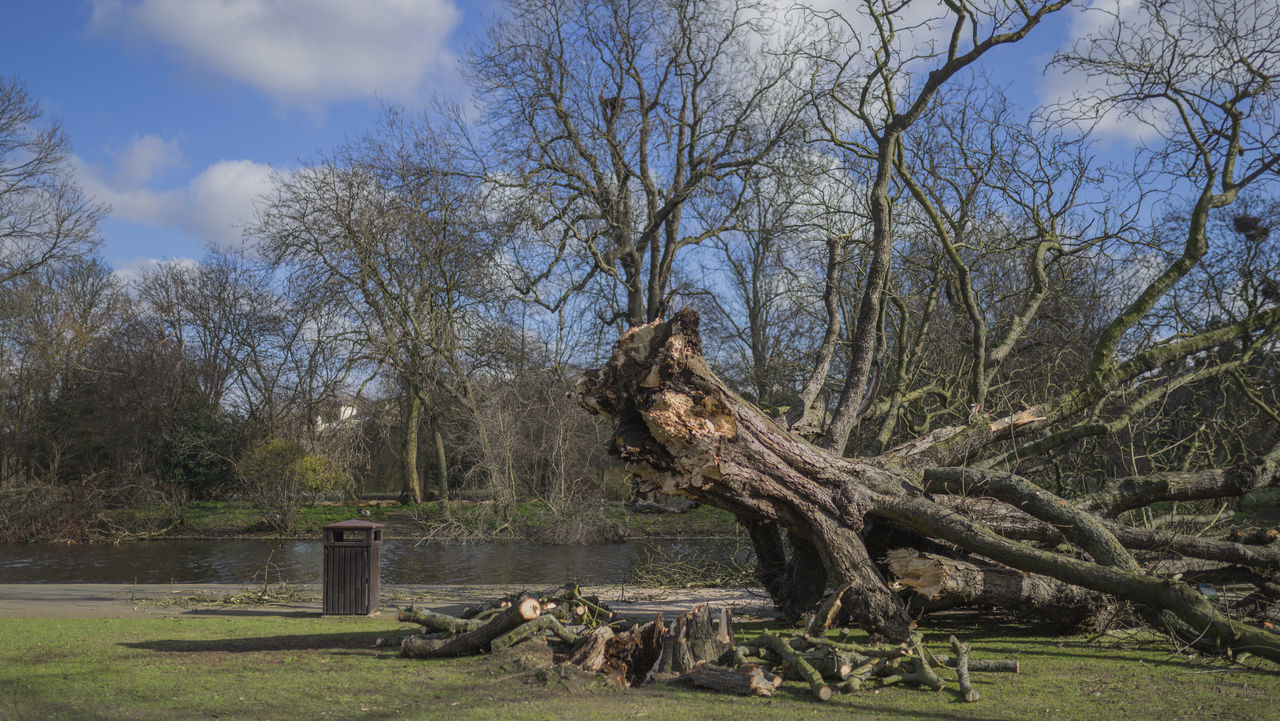 Fallen Tree Tree Nature Broken Tree Timber Wood Tree Trunk Branches Nature Urban Photography Windy Day Beauty In Nature Outdoors Sony A7r London Regents Park