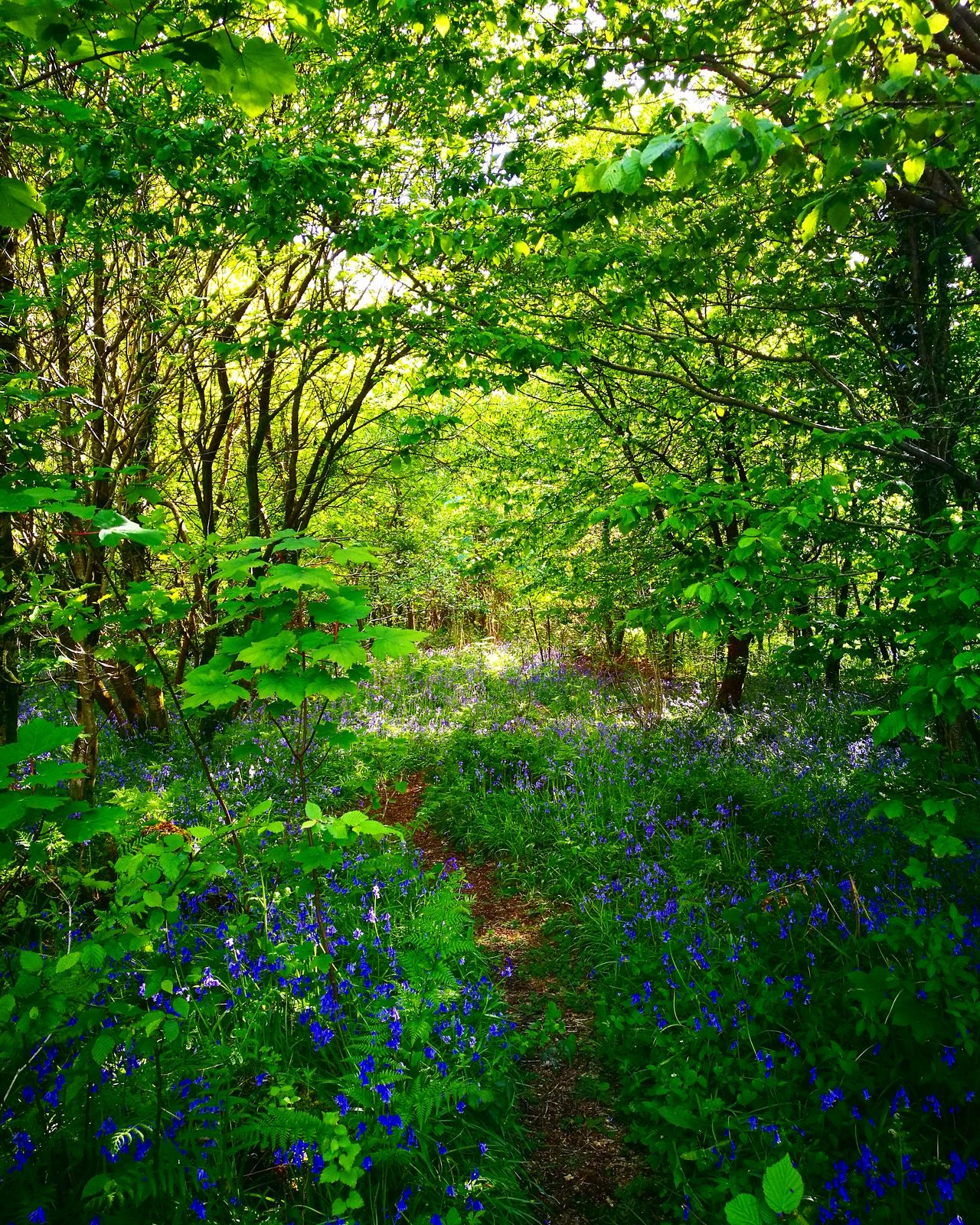 Hensol Forest. Grass No People Day Nature Outdoors Growth Beauty In Nature Tree Bluebells Cowbridge Grass Wales Beauty Forest Forest Path Forestwalk Forest Photography Hensol Forest
