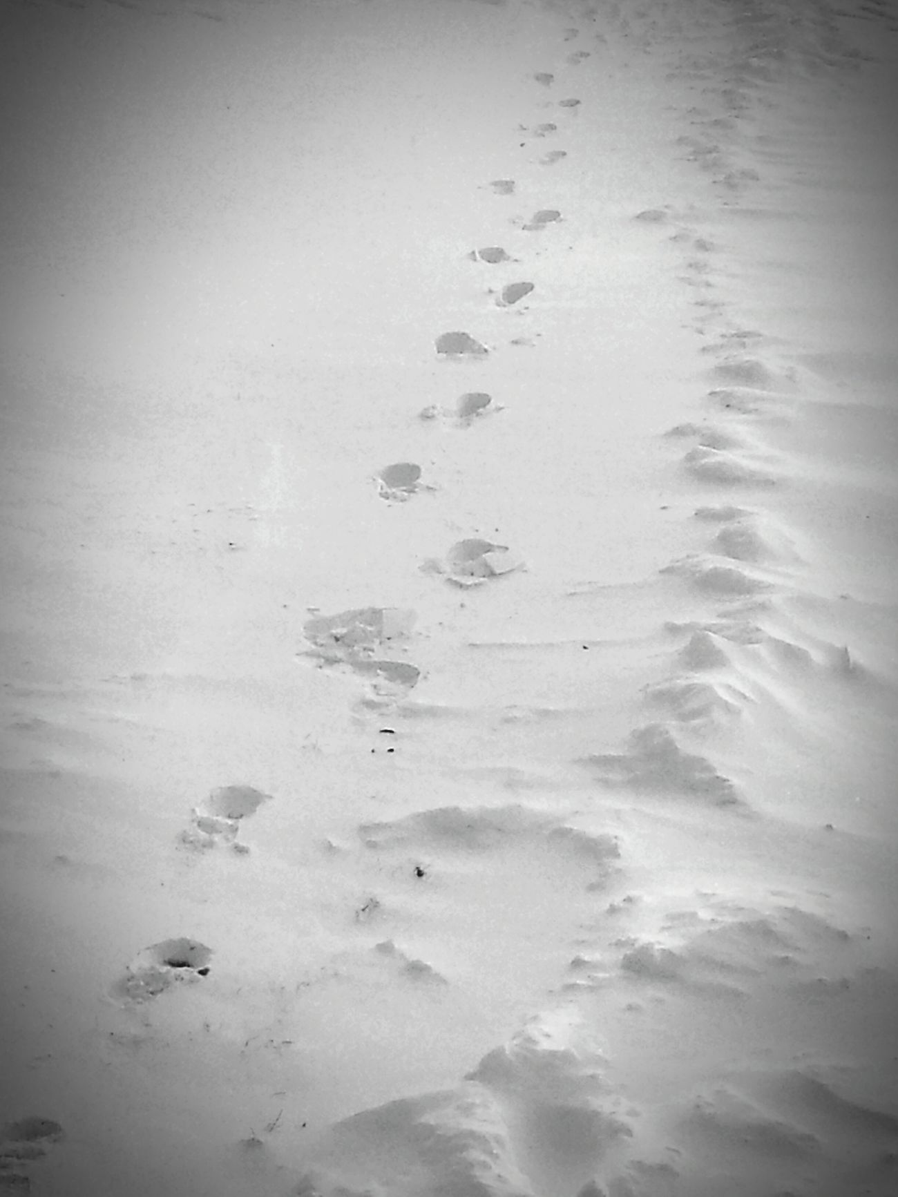 FootPrintsInTheSnow Taking Photos Enjoying Life Today's Hot Look My Photography North Dakota NorthDakotaLiving ❄⛄ NorthDakotaWinter WinterOf2015 Black&white