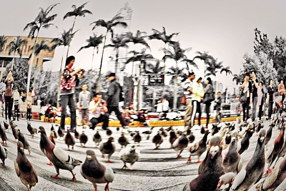 IPhoneography ..love Gravity.. ..the Easiest Way Is Never Stray.. The View And The Spirit Of Taiwan 台灣景 台灣情