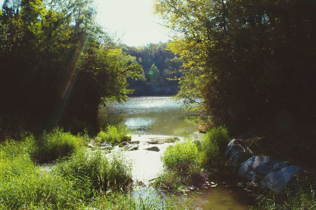 Tree Nature Tranquil Scene Tranquility Beauty In Nature Growth Water Idyllic Scenics Forest Outdoors Day Non-urban Scene No People Sunlight Grass River Landscape Plant