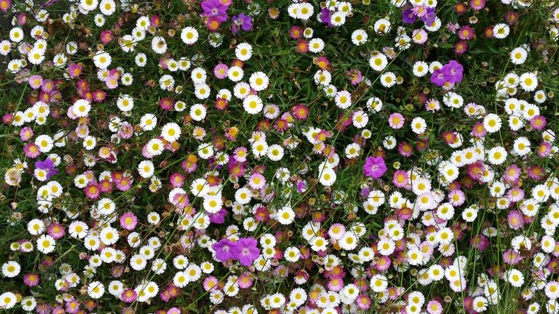 Abundance Arrangement Backgrounds Characters Choice Close Up Close-up Collection Colorful Container Detail Directly Above Full Frame Large Group Of Objects No People Order Side By Side Urban Variation Working