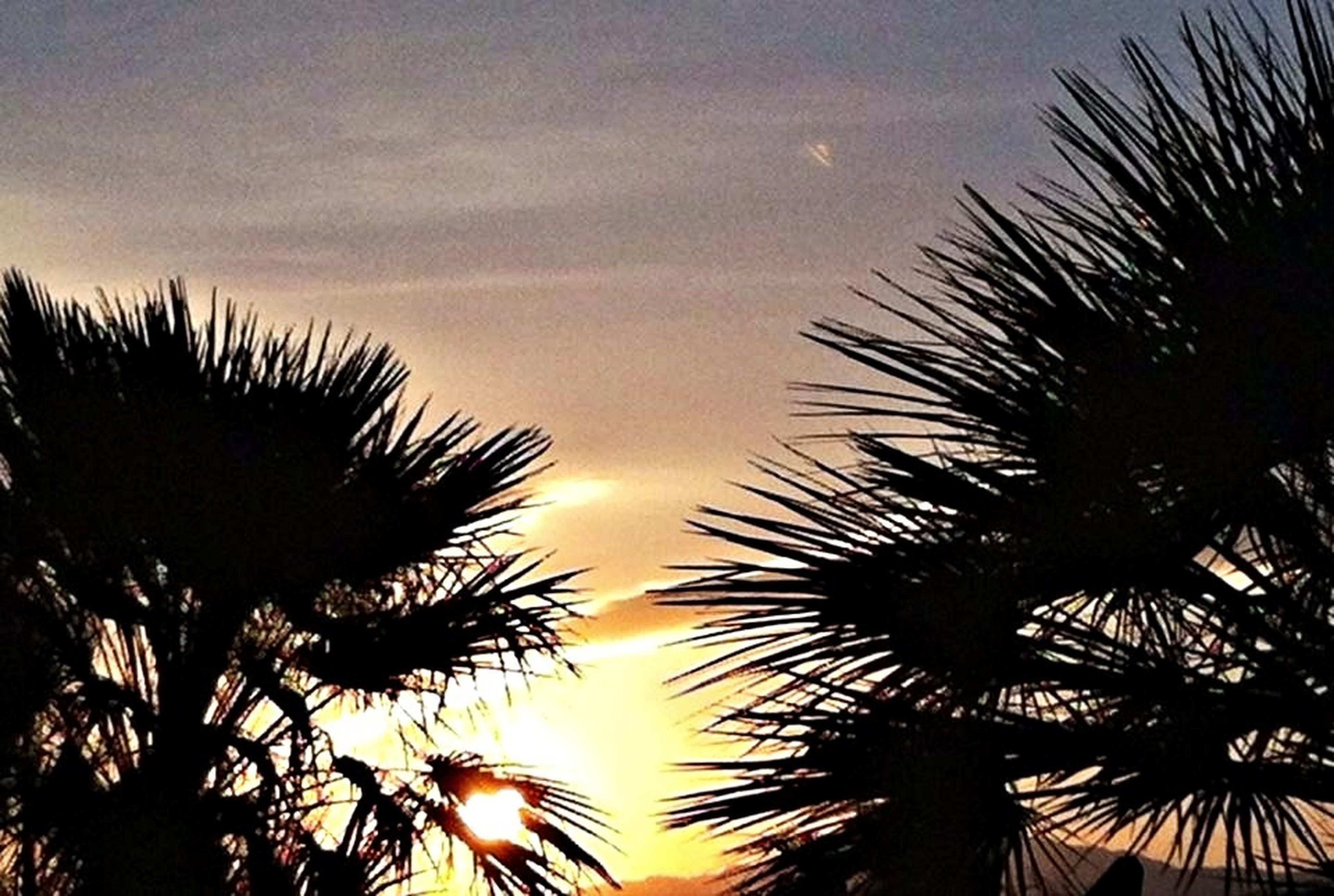 palm tree, low angle view, silhouette, sky, tree, sunset, growth, beauty in nature, nature, tranquility, palm leaf, scenics, tranquil scene, outdoors, cloud - sky, no people, dusk, palm frond, coconut palm tree, idyllic