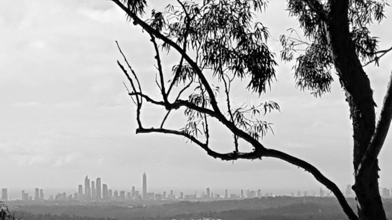 From a distance Skyline Tree View Cityscapes City