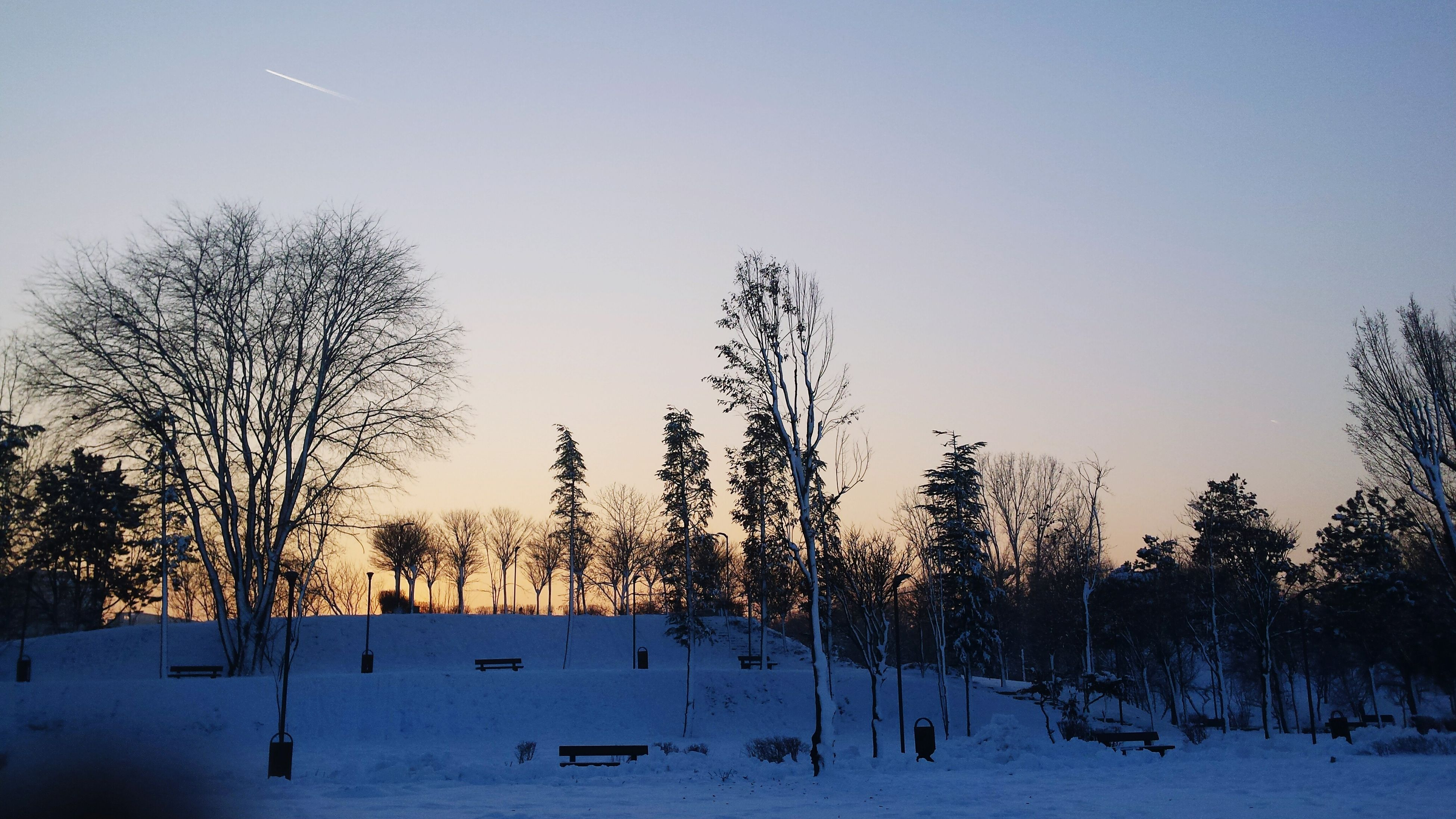 snow, winter, cold temperature, tree, clear sky, bare tree, tranquility, tranquil scene, season, beauty in nature, scenics, nature, landscape, copy space, weather, field, covering, silhouette, non-urban scene, branch