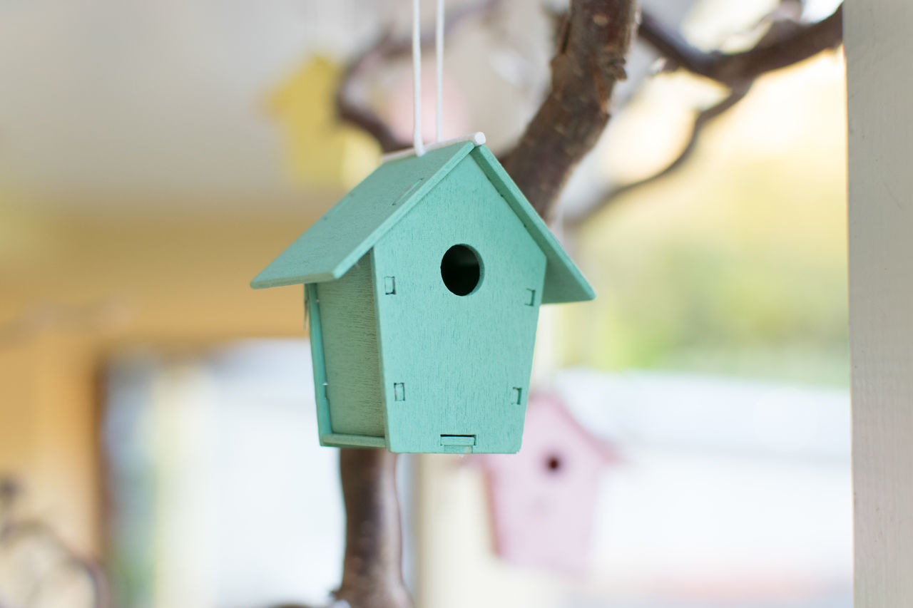 tiny bird house Bird Close-up Day Focus On Foreground Green Miniature No People Outdoors Tiny Bird House Wood - Material