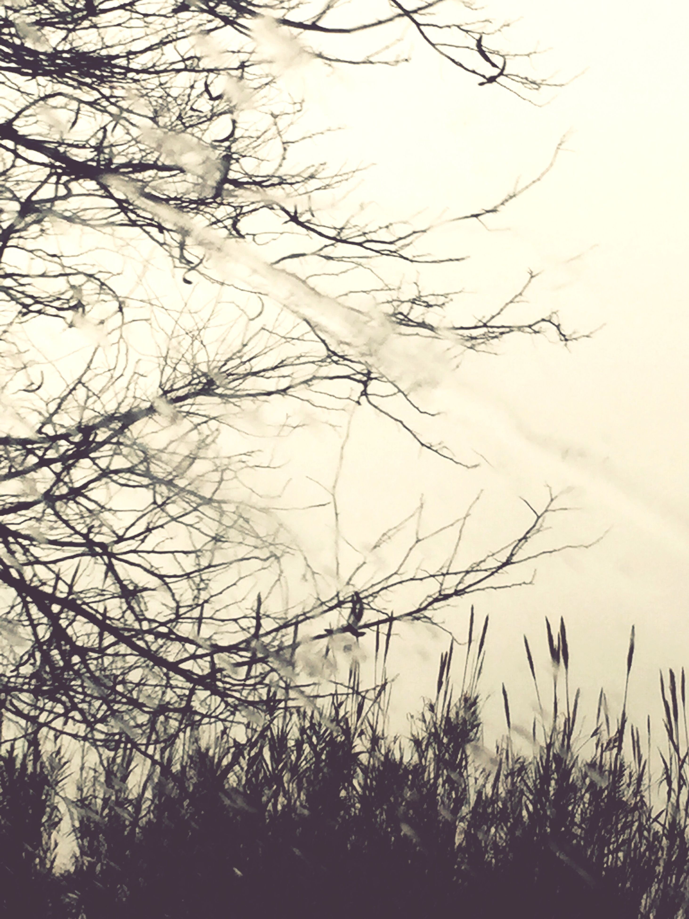 bare tree, branch, tree, tranquility, silhouette, tranquil scene, sky, nature, scenics, beauty in nature, growth, sunset, outdoors, no people, idyllic, dusk, non-urban scene, plant, low angle view, water