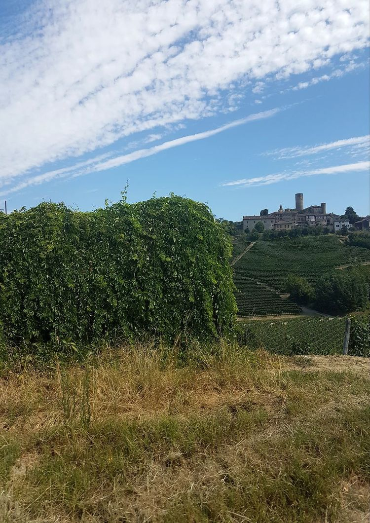 Beauty In Nature Cloud - Sky Agriculture Growth Freshness Vineyards  Piedmont Italy Langhe Italy Travel Destinations Langhe Castle Castiglione Falletto Outdoors Day Sky No People