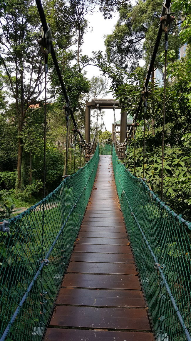 suspension bridge aka canopy walk in Bukit Nenas forest reserve Beauty In Nature Boardwalk Canopy Walk Diminishing Perspective Footbridge Footpath Forest Green Green Color Growth Idyllic Long Narrow Nature No People Outdoors Pathway Plant Scenics The Way Forward Tranquil Scene Tranquility Tree Vanishing Point Walkway