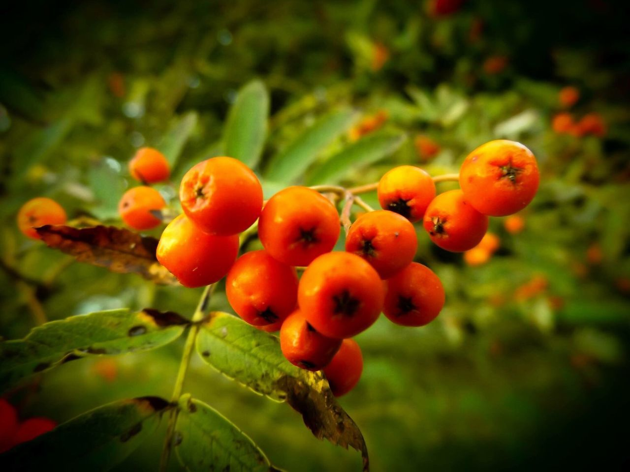 Berry time. Growth Fruit Food And Drink Focus On Foreground Nature Outdoors Growing Tree Freshness Day No People Food Close-up Plant Leaf Healthy Eating Beauty In Nature
