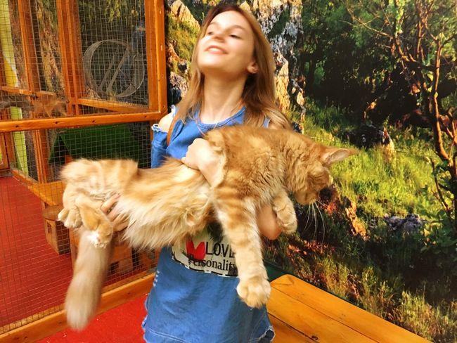 😂😂😂 Pets Big Cat