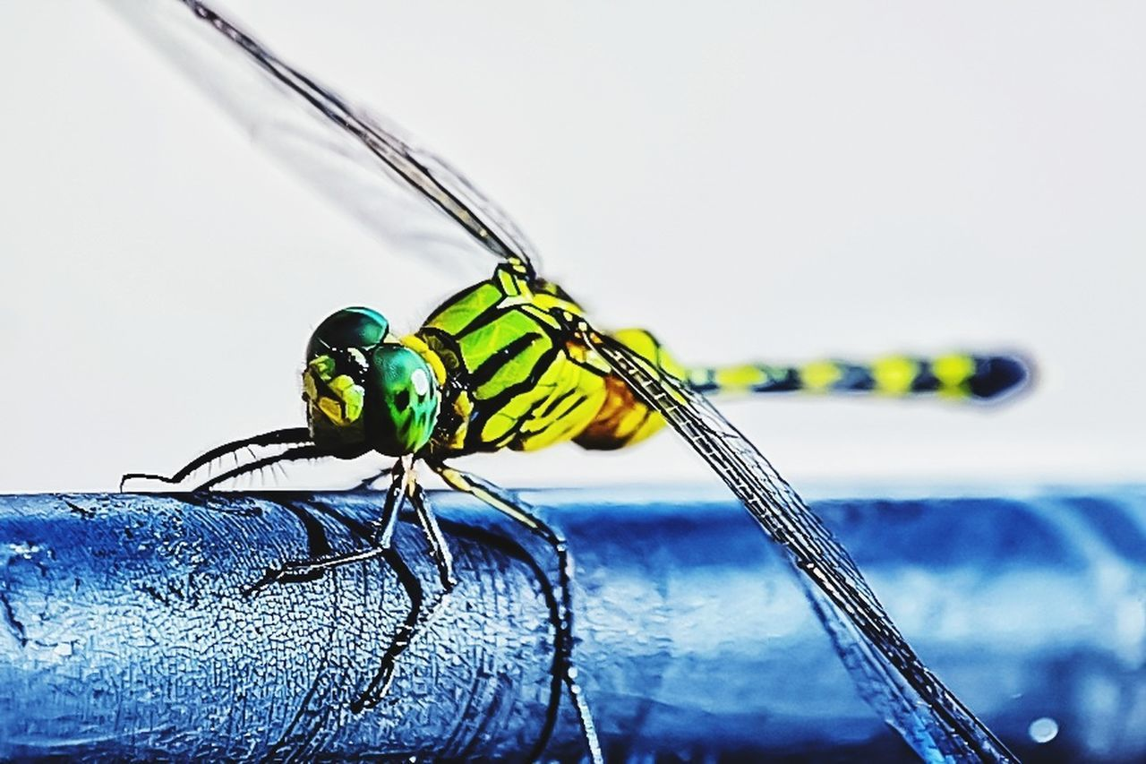 insect, animal themes, animals in the wild, one animal, animal wildlife, focus on foreground, close-up, day, no people, damselfly, outdoors, full length, nature