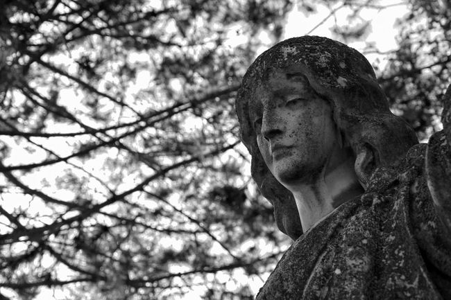 Statue Sculpture Human Representation Tree Art And Craft Focus On Foreground Branch Outdoors Creativity No People Blackandwhite Black And White Black & White Black And White Photography Monochrome Graveyard Beauty Graveyard Cemetery Bokeh Religion Art And Craft Statue The Culture Of The Holidays