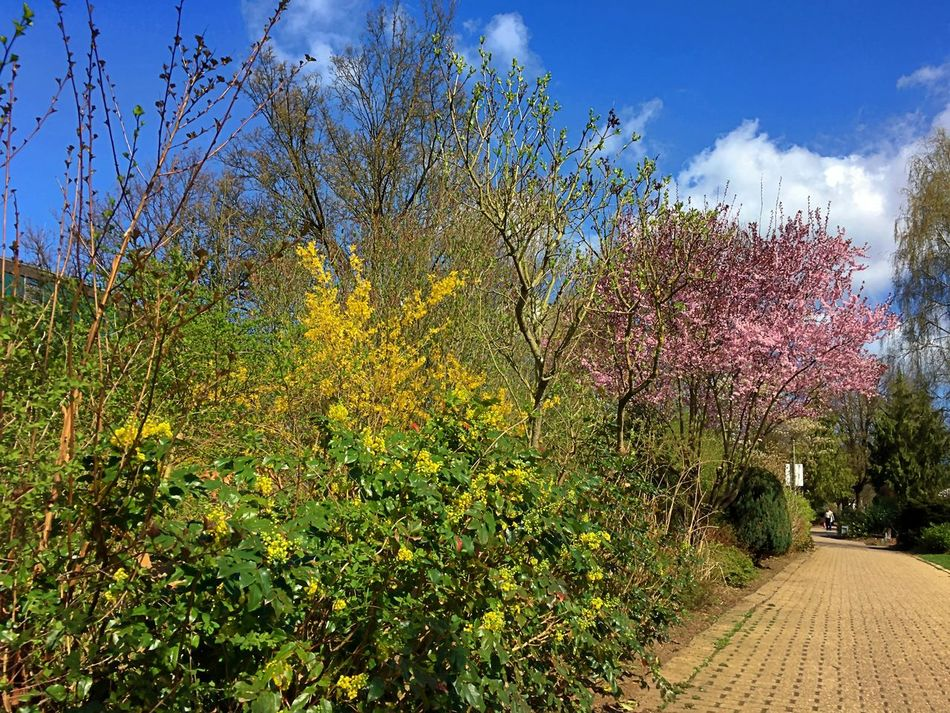 Beauty In Nature Day Flourish Flourishing Flower Freshness Green Color Growth Nature No People Outdoors Plant Scenics Sky Sky And Clouds Spring Spring 2017 Springtime Tree Tree Tree And Sky Tree_collection  Trees Trees And Sky Treescollection