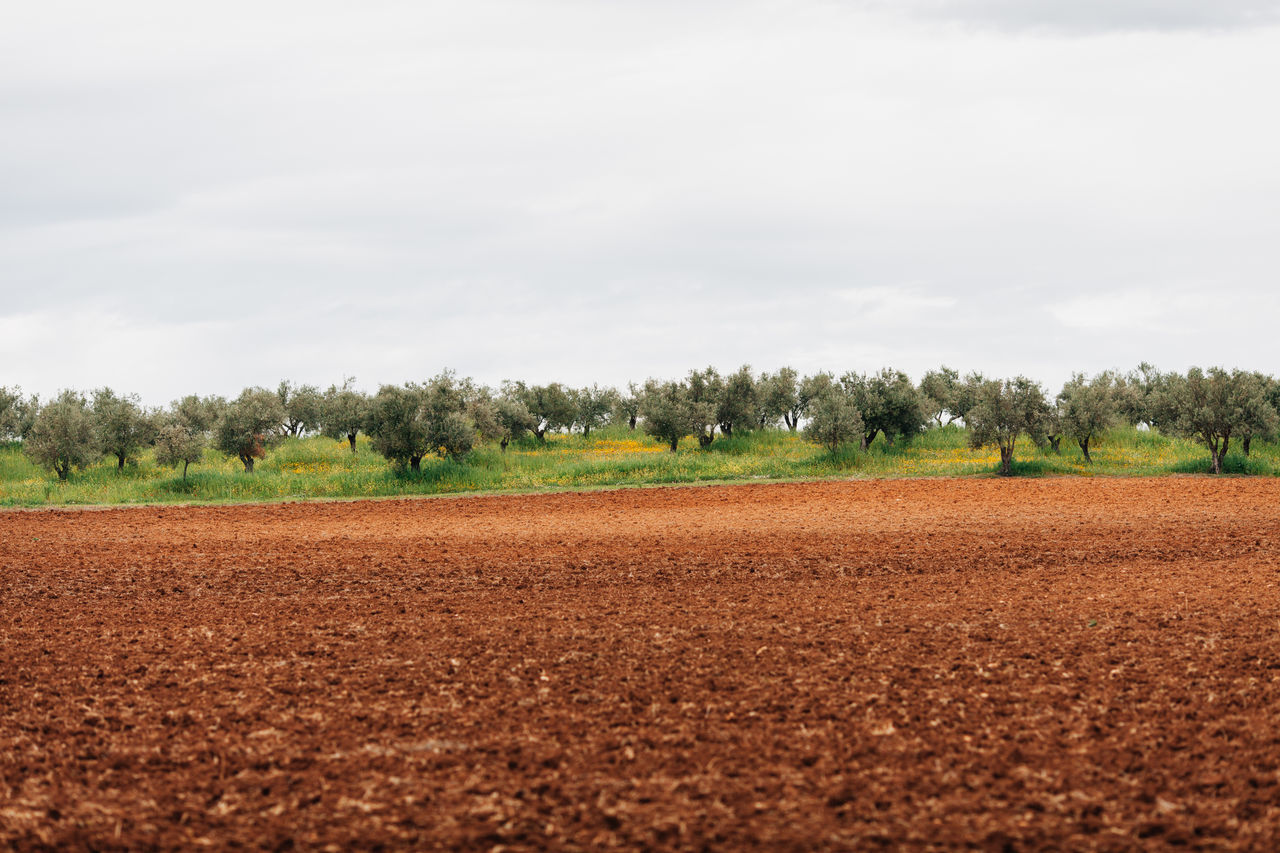 Agriculture Beauty In Nature Cloud - Sky Day Field Green Growth Landscape Nature Nature Nature_collection No People Olives Outdoors Rural Scene Scenics Sky Tranquility Tree