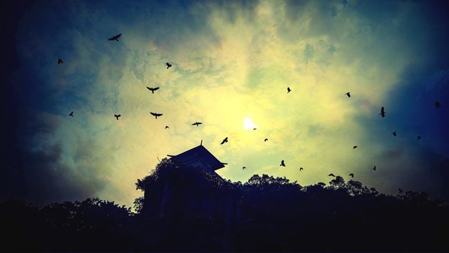 Sky Nesting -Lotus Hill Swallow Cliff Silhouette Silhouette And Sky Lowlight Under Exposure Sky And Clouds Skyscape Skyporn Birds Birds Silhouette Sun Sunset Guangzhou China