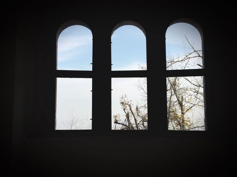 View Windows Tree First Eyeem Photo