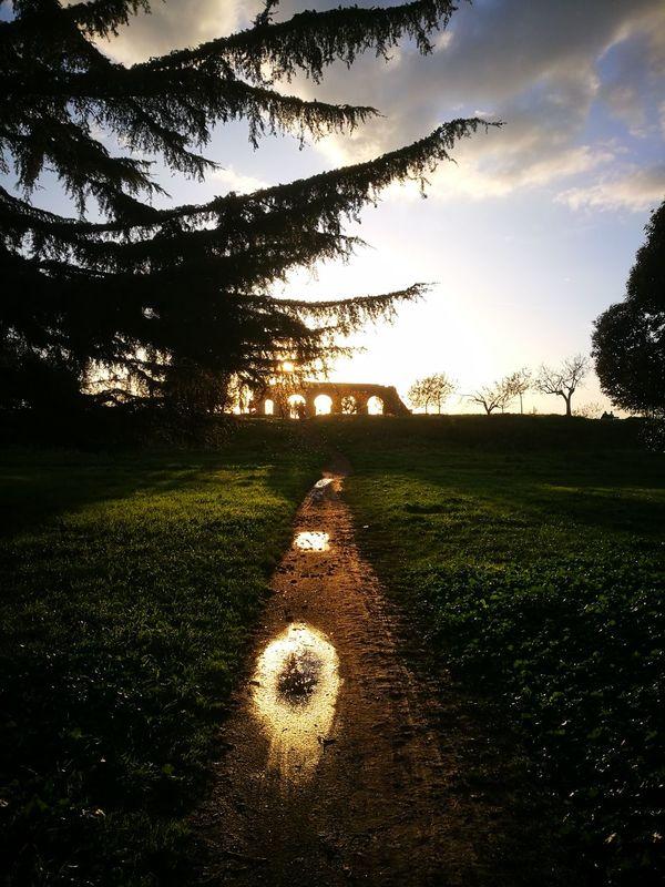 Sunset Tree Nature Rome Parco Degli Acquedotti Rome Italy🇮🇹 EyeEmNewHere