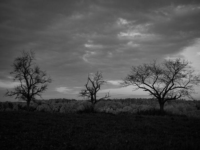Landscape Nature Cloud - Sky Tree Field Outdoors Sky Autumn Black And White Monochrome