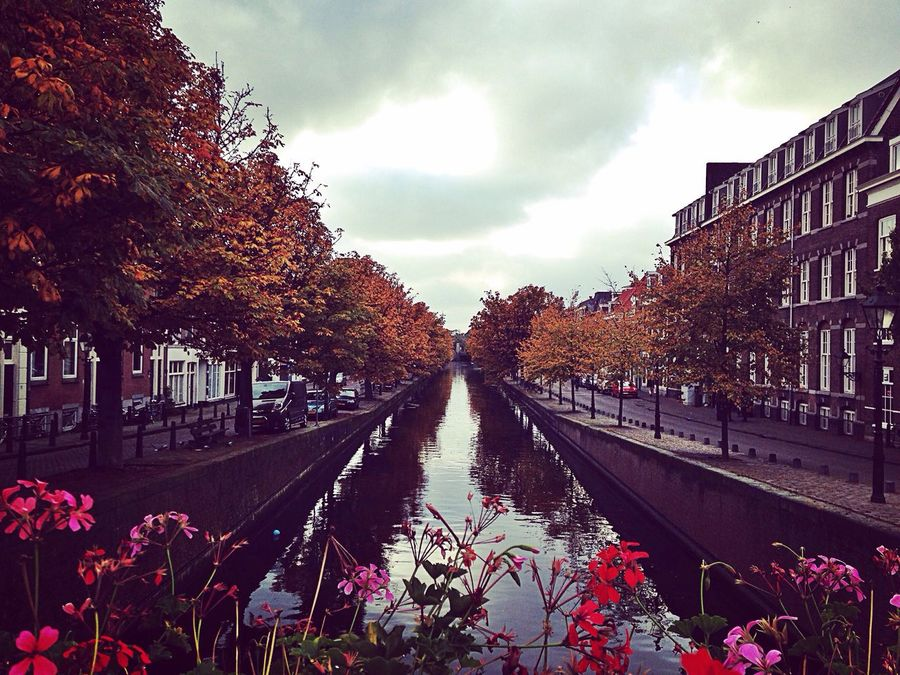 Den Haag La Haye Holland HollandExperience HollandeVisit Pays Bas Netherlands Water Fall Canaux Autumn Autumn Colors Fleurs Flowers Urban Photography Nature Photography