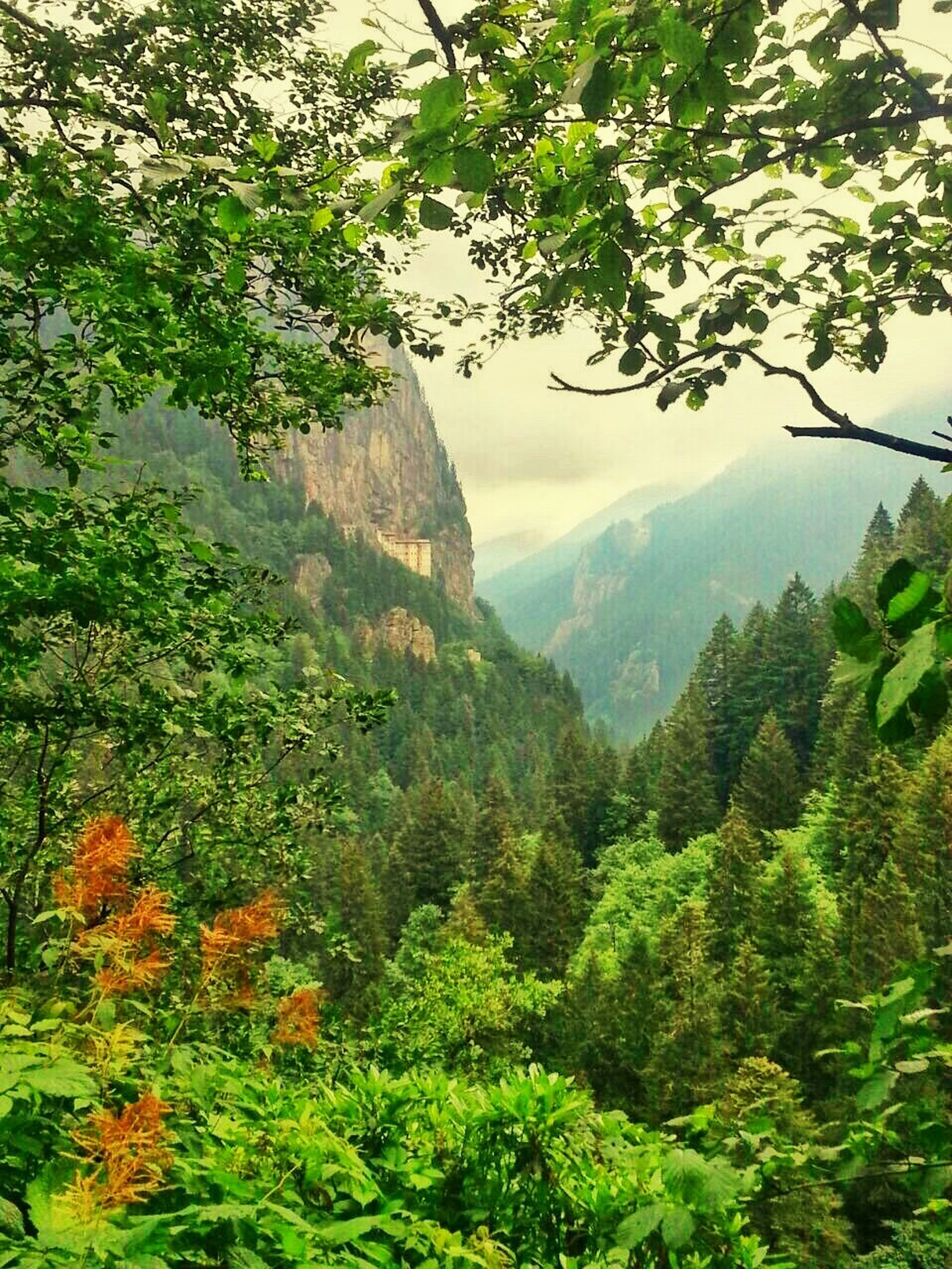 tree, mountain, tranquil scene, tranquility, scenics, green color, beauty in nature, lush foliage, growth, nature, forest, green, non-urban scene, landscape, idyllic, sky, valley, day, greenery, branch