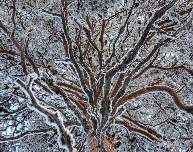 . Jʊღ♭ʟε . ❄️❄️❄️❄️. Showcase: January EyeEm Best Shots Tadaa Community Vackra Dalarna EyeEm Nature Lover Canon Eye Em Best Shots Trees TreePorn AMPt_community