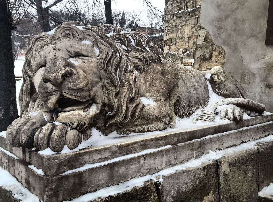 Lviv, Ukraine Lviv Winter Lions Of Lviv Lionsculpture Snow ❄ Beauty In Ordinary Things Sleeping Lion Lvivforyou Lvivdetails Lviv💝