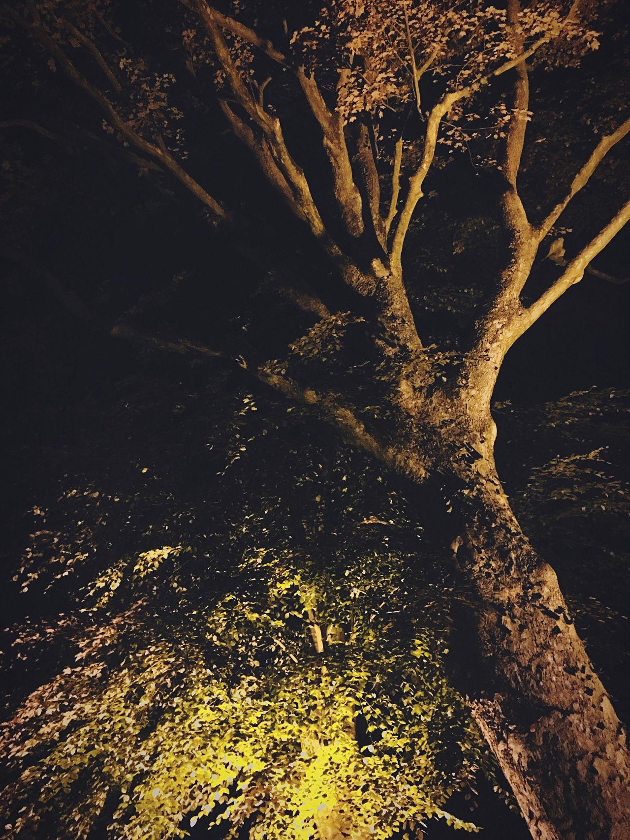 Lit Tree at Night Tree No People Nature Outdoors Tree Trunk Beauty In Nature Day Scenics Branch Close-up Night Nightphotography Night Photography Trees Lit Illuminated Illumination