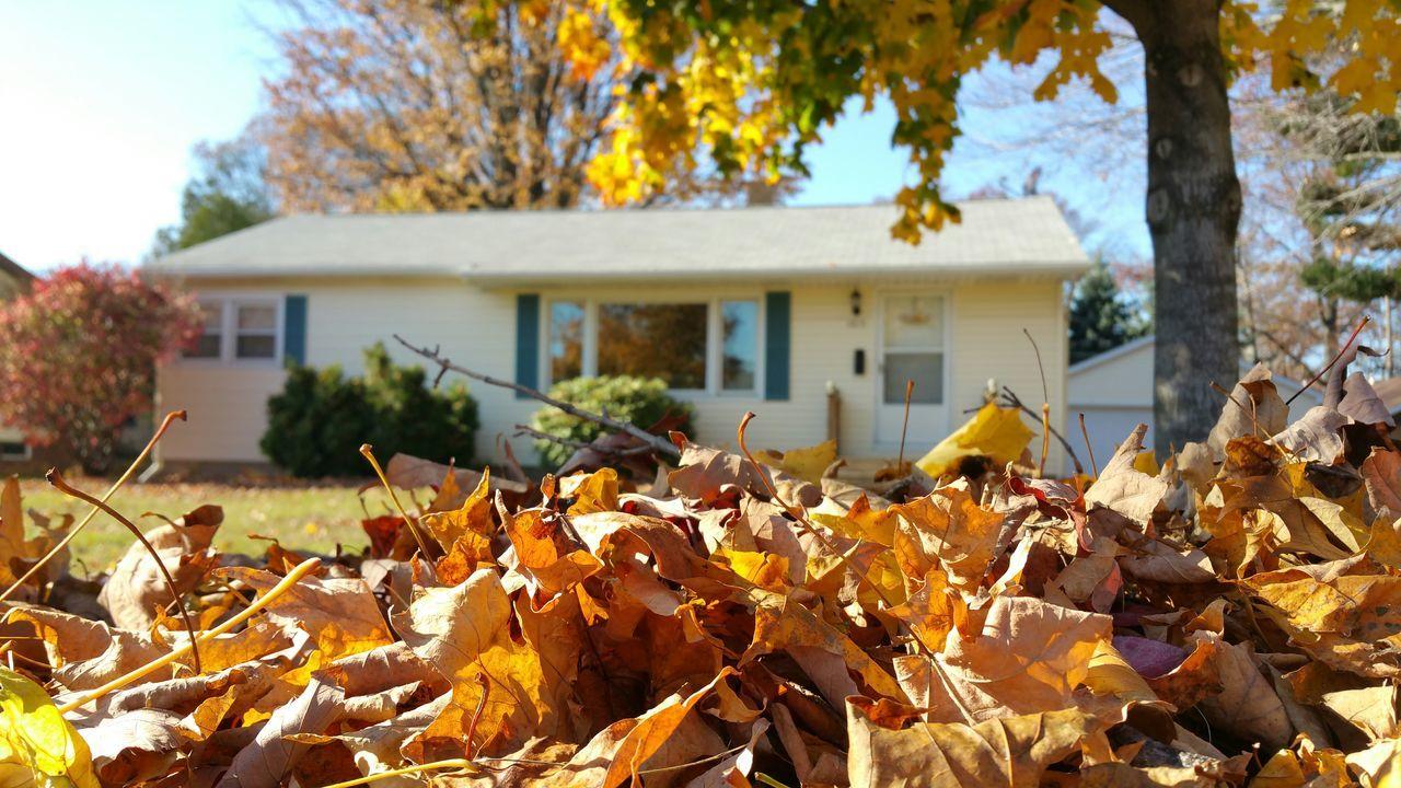 Fall Autumn Leaves Fall Colors Leafs Fall Leaves Fall Beauty Pure Ludington Perspective