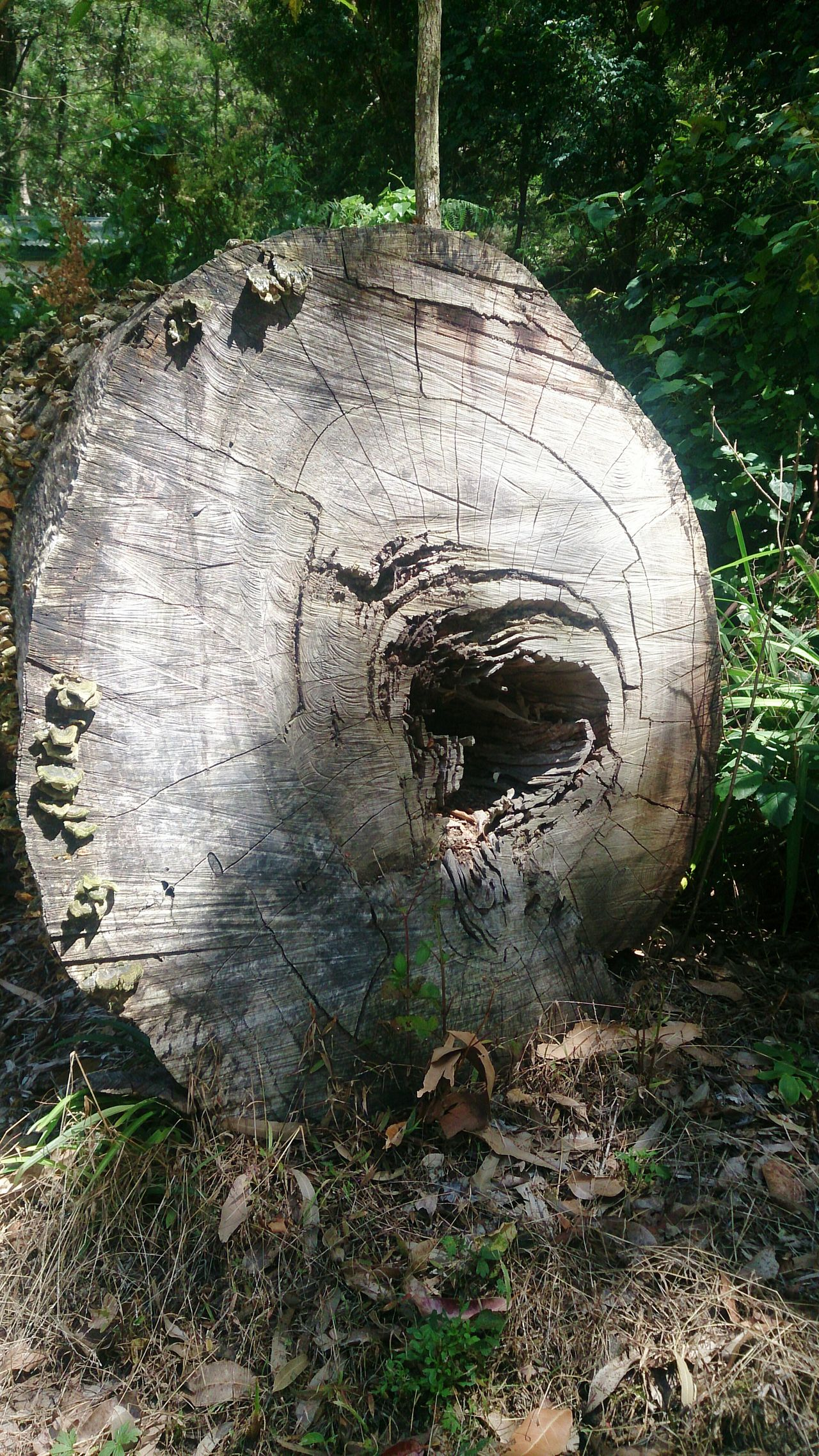 The Log Timber Dead Tree Forest Photography Life in a tree Dead Tree Giving Life