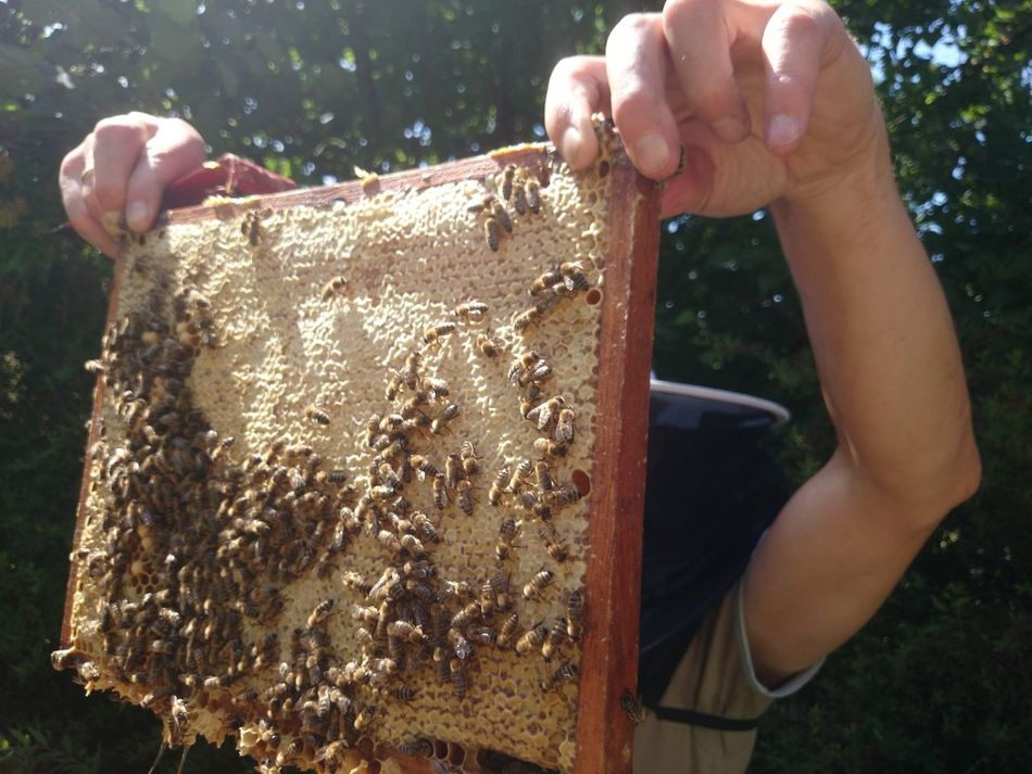Beautiful stock photos of farm, Agriculture, Apiary, Bee, Beehive