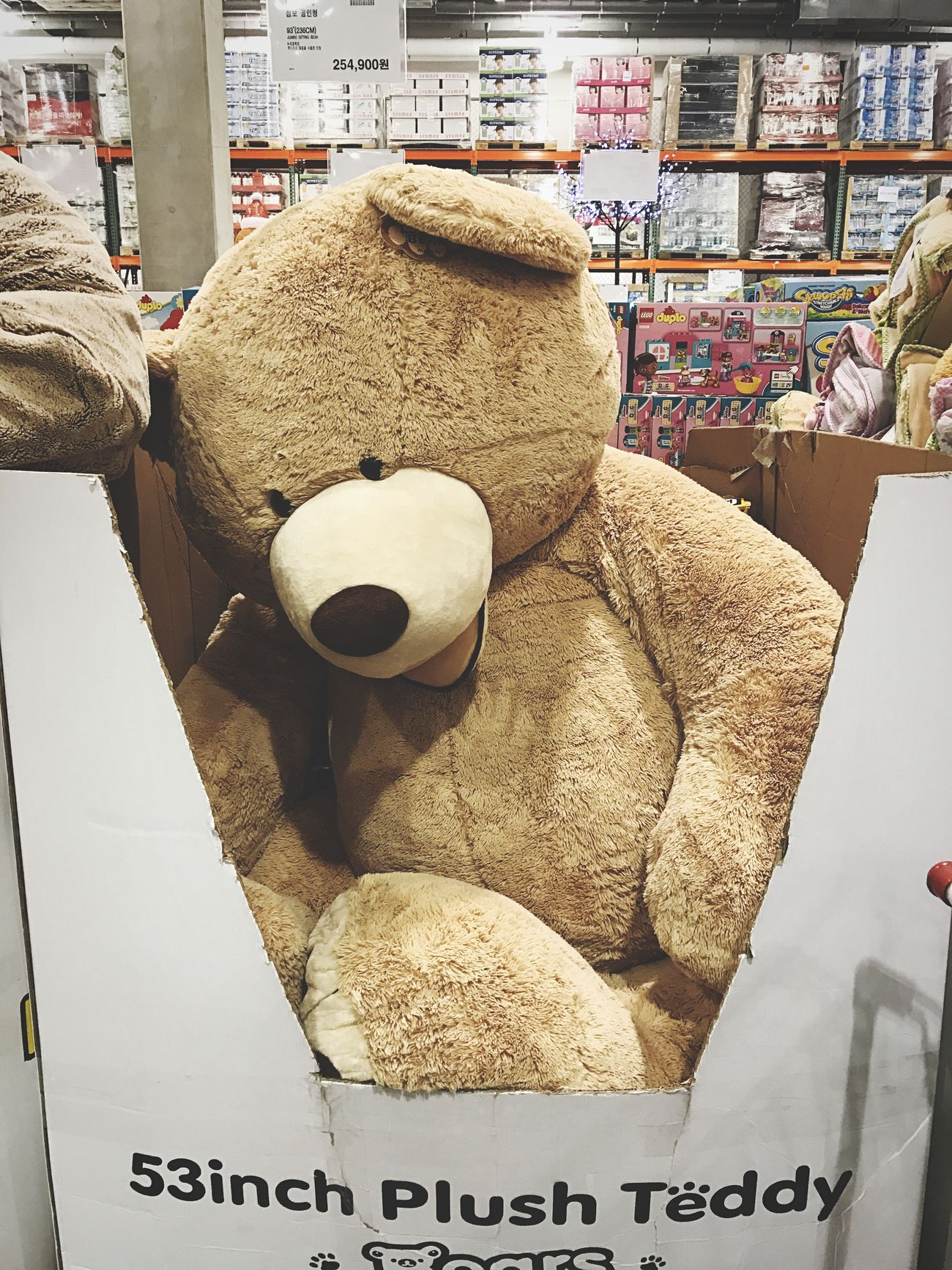 For Sale Costco Bears Teddy Bears Jumbo
