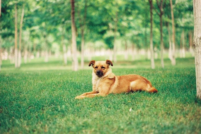 EyeEm Selects Dog Pets Grass Animal Green Color One Animal Nature Domestic Animals Outdoors Animal Themes Mammal No People Puppy Portrait Day Happiness Tree Full Length Protruding