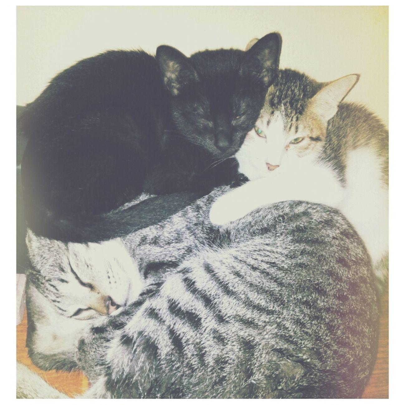 Good MEOWning :3.. nilalamig sila hehe! Happy New Year 2015 Cats Cute Cats (>^ω^<)