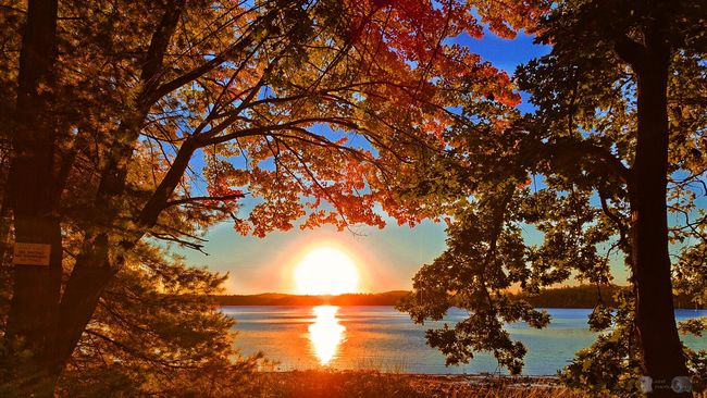 Good morning..... 🍁🍂🍁☕ Tree Water Sun Lake Reflection Sunlight Tranquil Scene Scenics Tranquility Silhouette Sunbeam Beauty In Nature Branch Change Orange Color Travel Destinations Lakeshore Tourism Lens Flare Nature Landscape