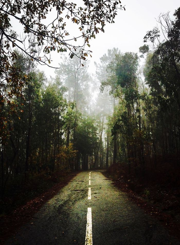 I've waited about a year to take this picture. Totally worth it! Nature Photooftheday Tgif Portugal Color Fog Foggy Road The Great Outdoors - 2016 EyeEm Awards
