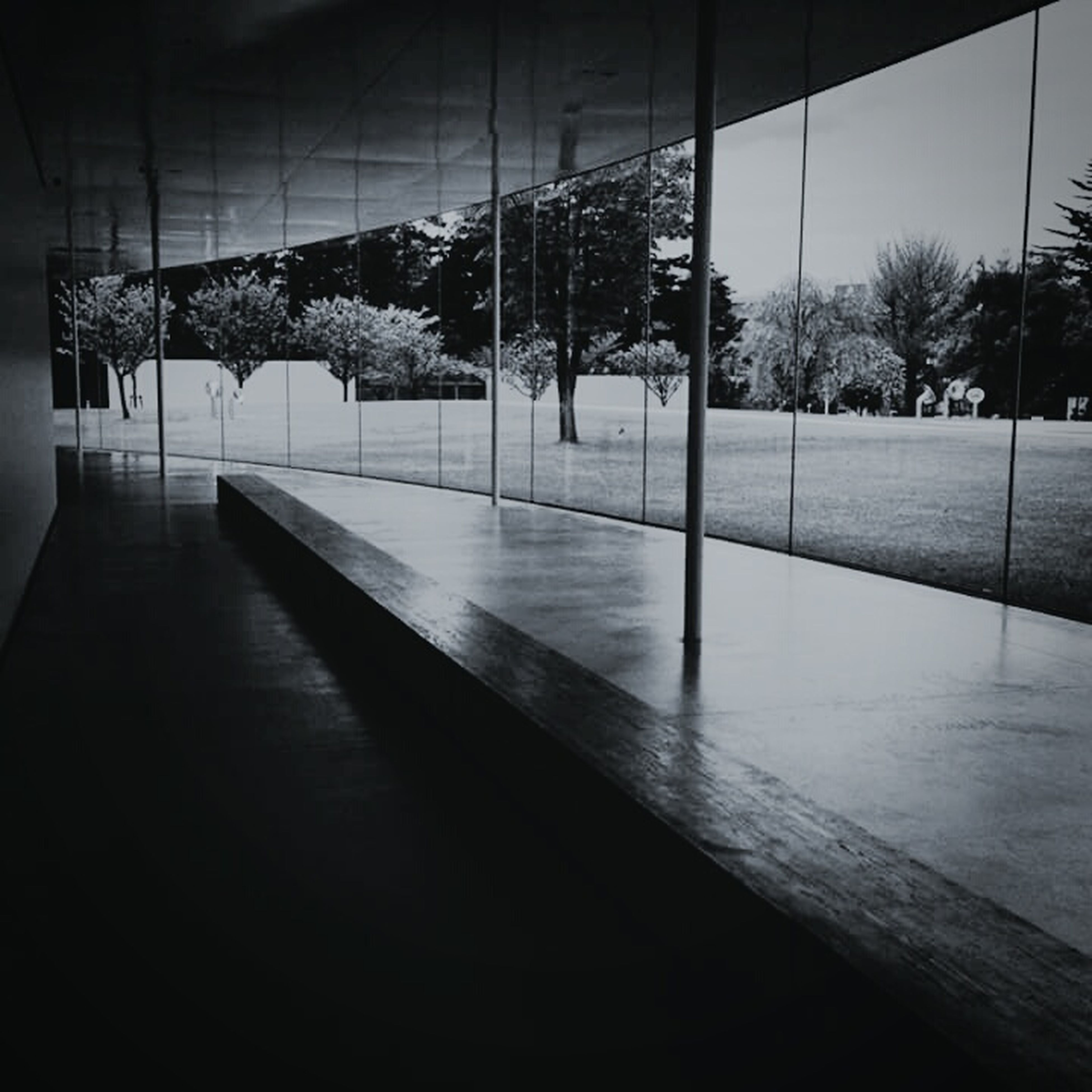tree, indoors, built structure, architecture, empty, railing, shadow, absence, the way forward, sunlight, architectural column, day, no people, park - man made space, window, flooring, glass - material, fence, metal, incidental people