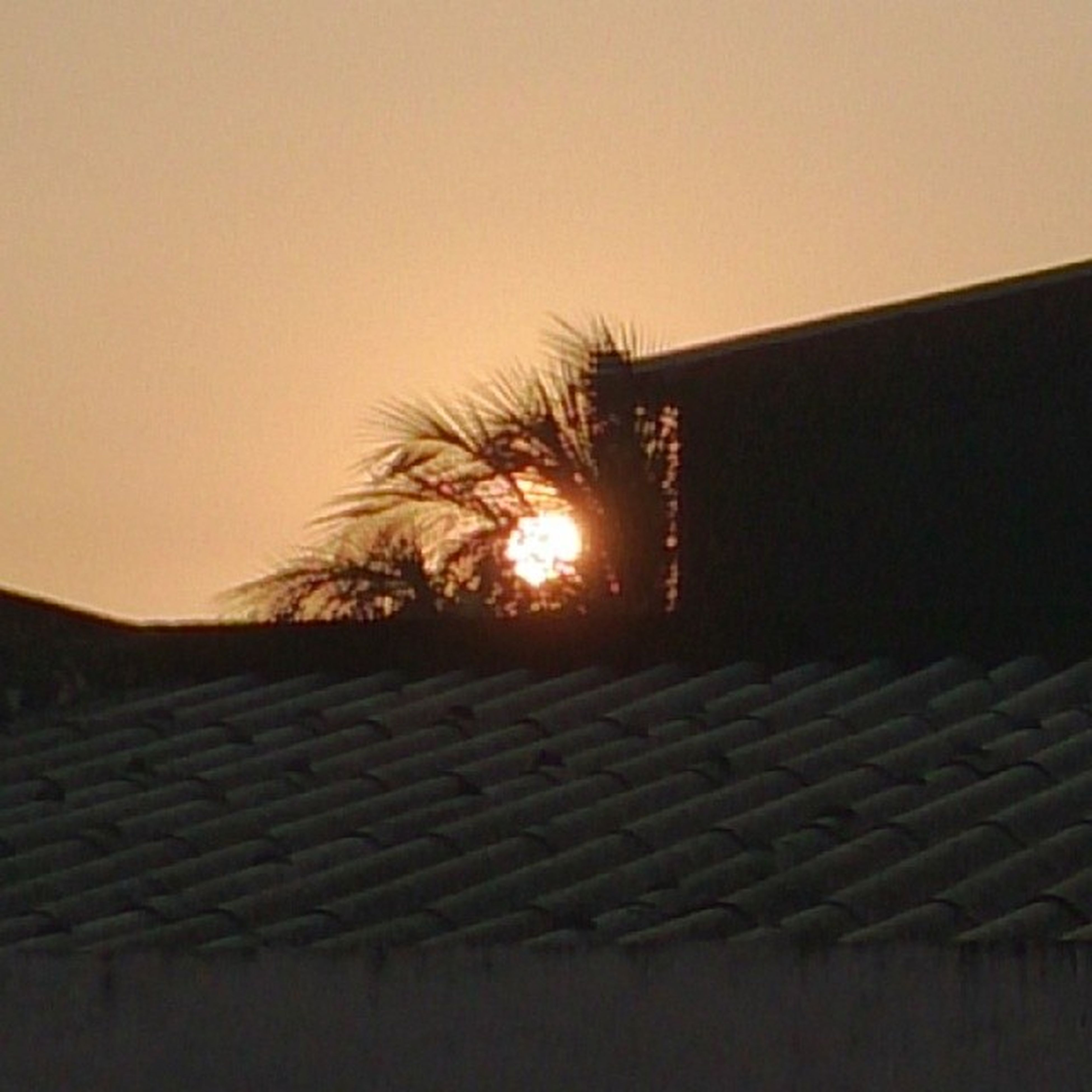 sunset, silhouette, clear sky, sun, copy space, orange color, built structure, low angle view, building exterior, sunlight, architecture, dark, palm tree, sky, tranquility, nature, outdoors, tree, no people, tranquil scene