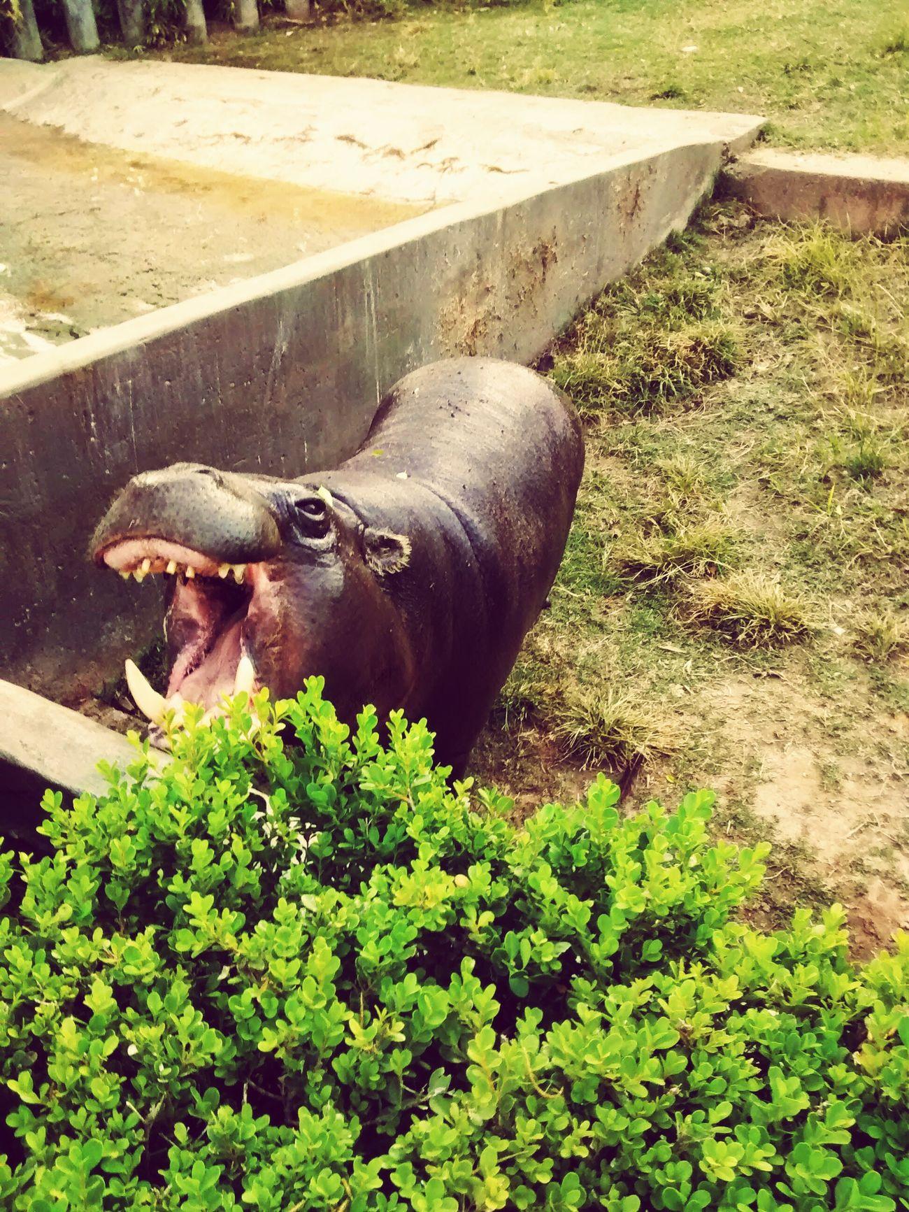 Zoo Hipopotamó